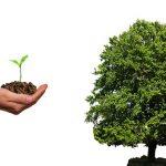 plant-4159065_640